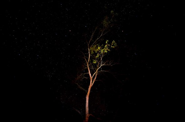Stars at Boolumba Creek on the Conondale Great Walk on June 17 2014