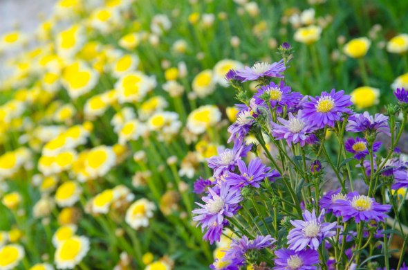 WEB Flowers in an Annerley garden on October 14, 2014